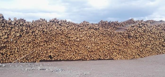 На фотографии заготовленная балансовая древесина, очищенная от коры и веток